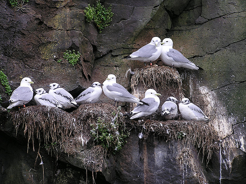 Summer of the Seabirds – Techniques in the Field
