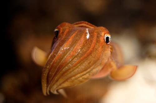 Sponges, Anemones, & Cuttlefish, Oh My! What Animal Phylum is Best?